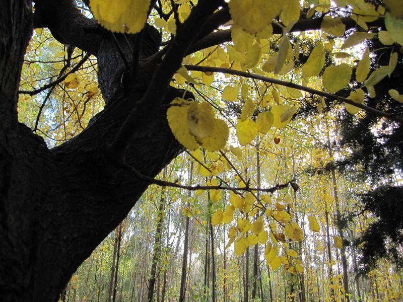 Autumn-Iran-Shiraz