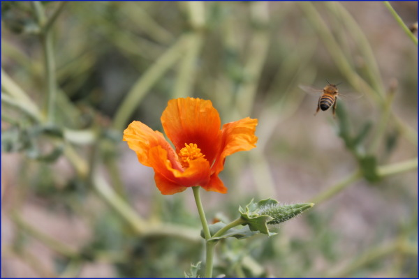 bee flower nature