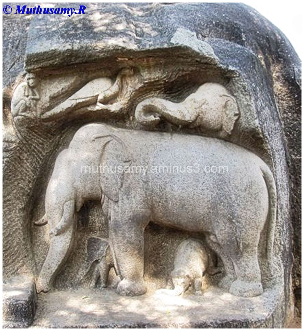 Elephant Panel, Trimurti Cave, Mahabalipuram (24)