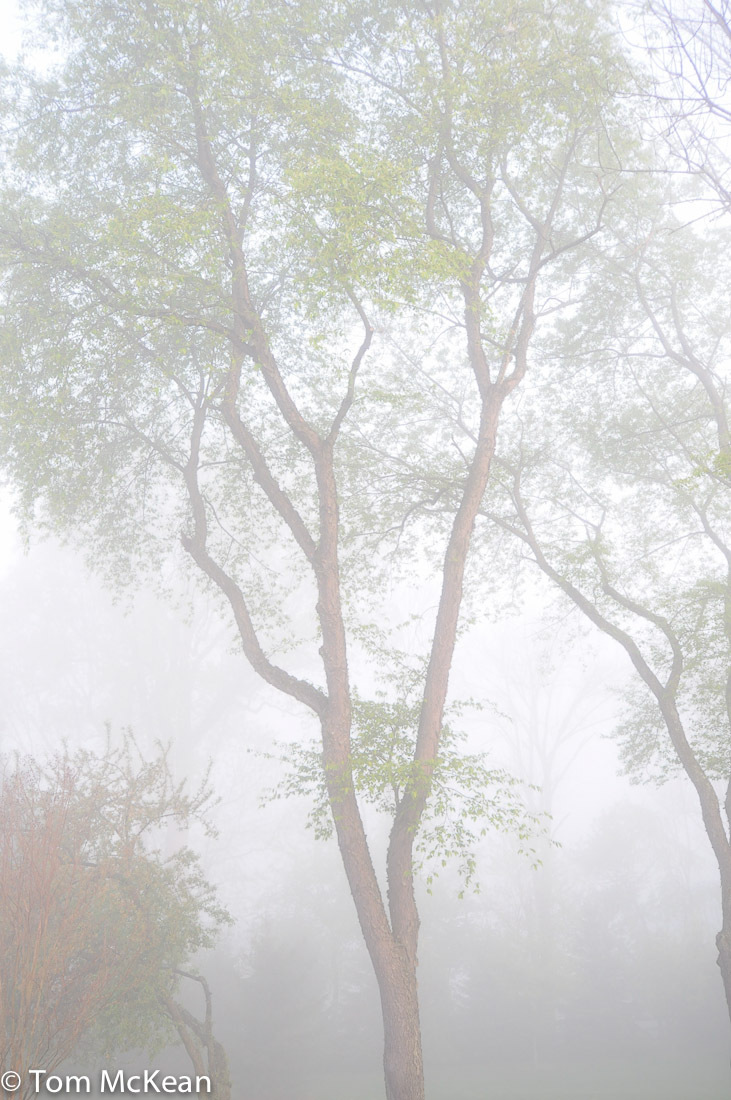 tree in an early morning fog