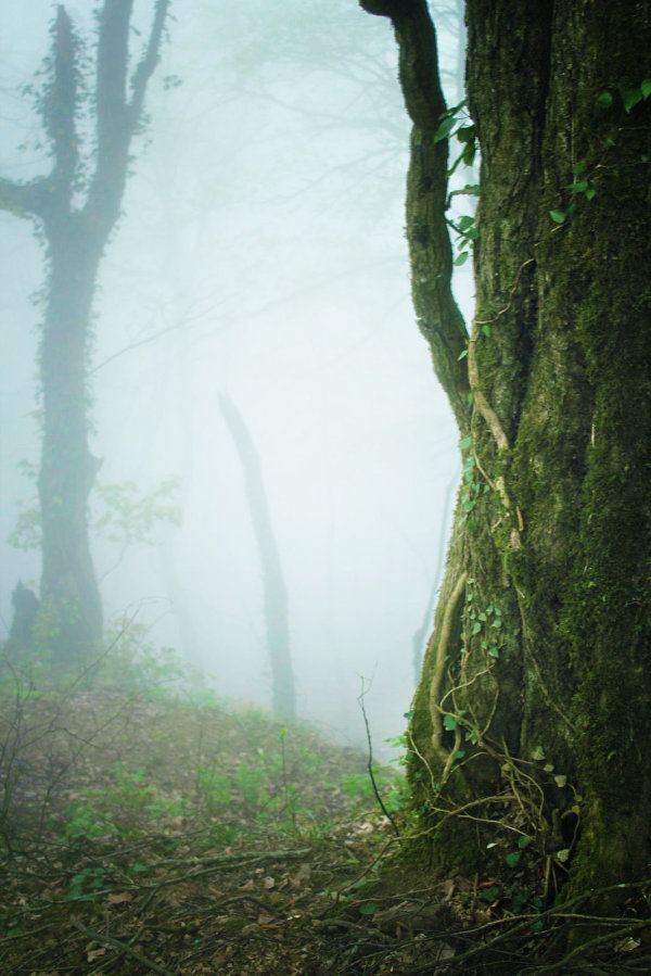 Fog in the green forest