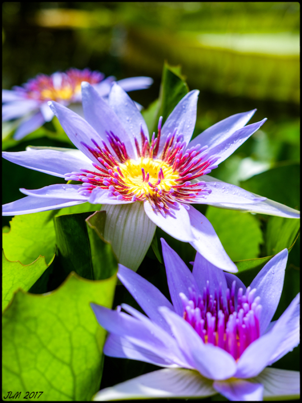 Interlude fleuri