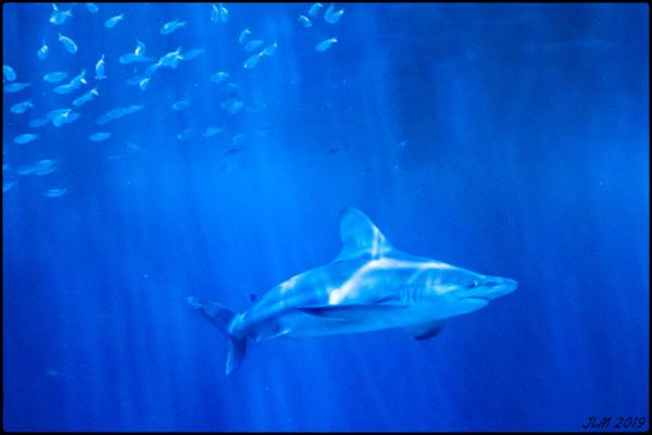 Fujifilm X-Pro2 Chicago Aquarium
