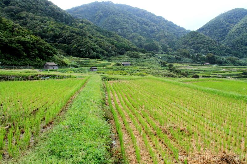 Terraced rice paddy near the sea