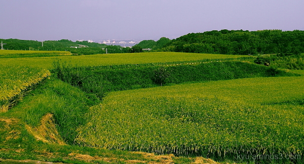 Terraced rice paddy #2