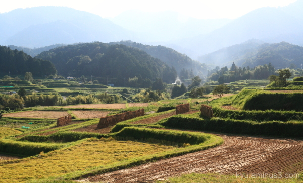 Rice paddy in the postharvest season #1