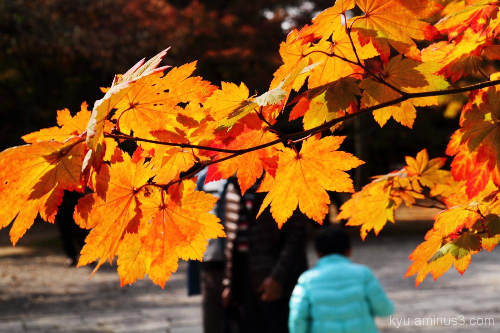 Enjoying autumn colors