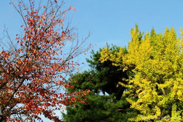Autumn colors in Arashiyama