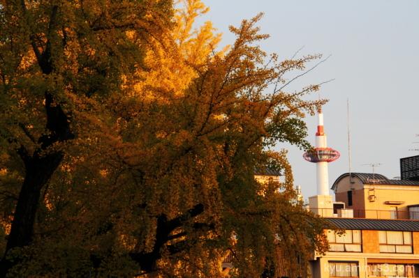 Behind the big gingko tree