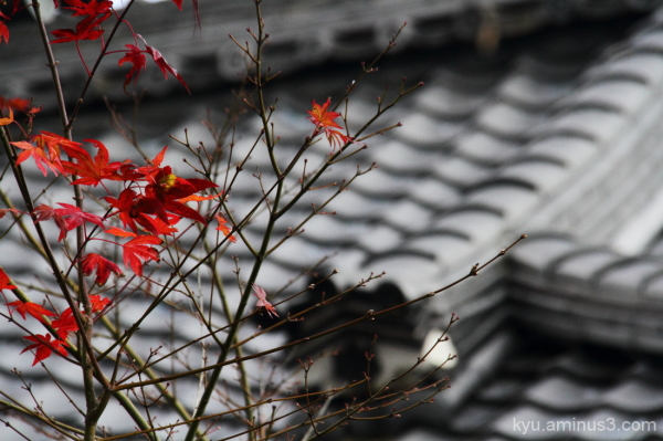 Maple leaves near the roof of the temple