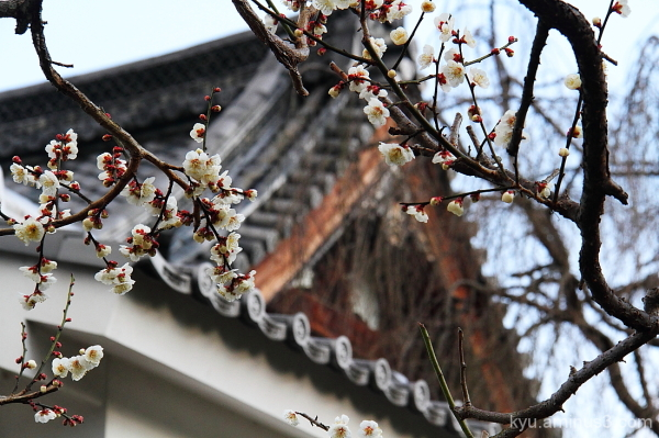 Plum blossoms in the temple