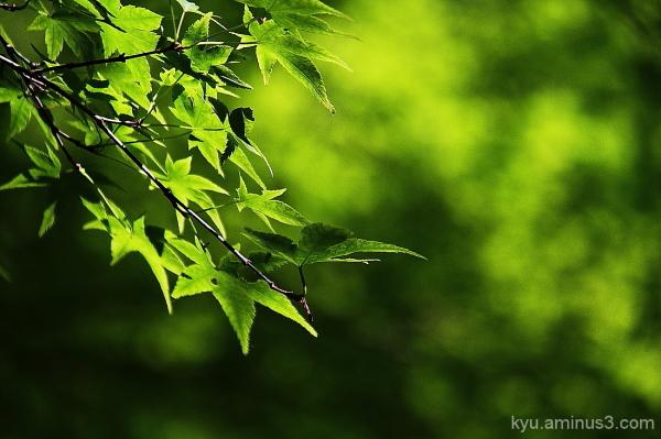 Season of fresh green