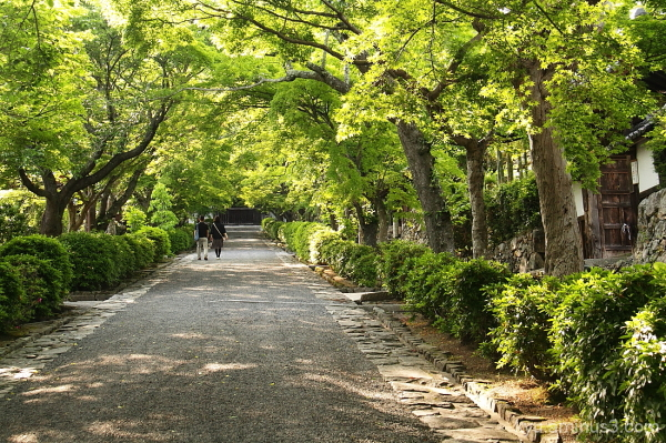 Walking under green leaves