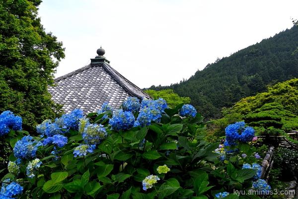 Image of June