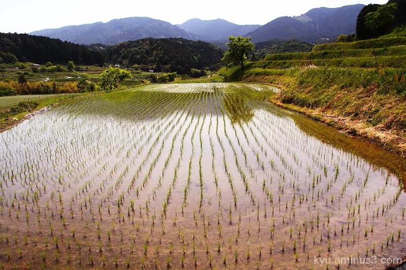 View with  terraced rice paddies