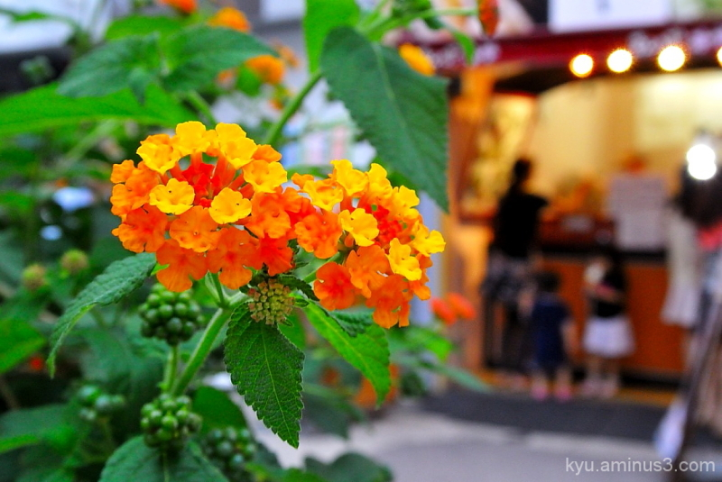 Flowers in front of the ice cream shop