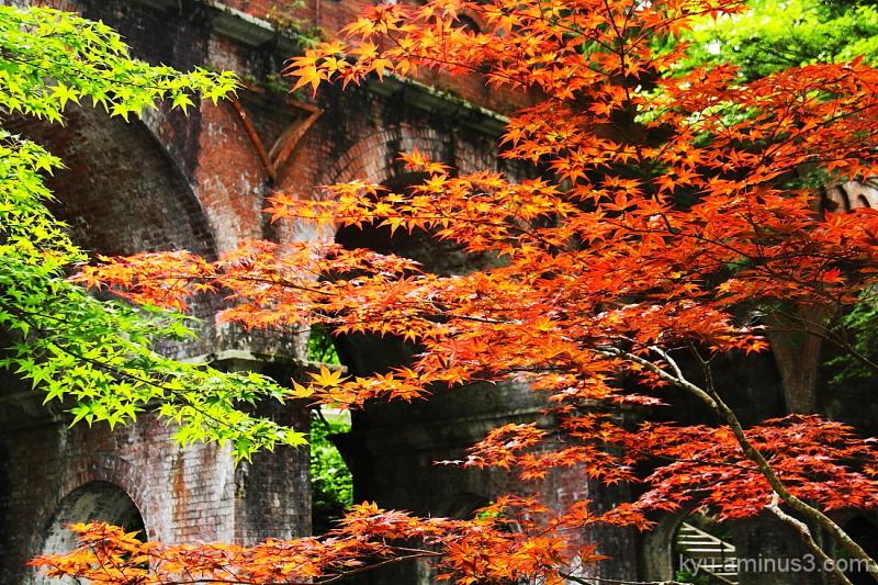 Autumn scene at the Aqueduct