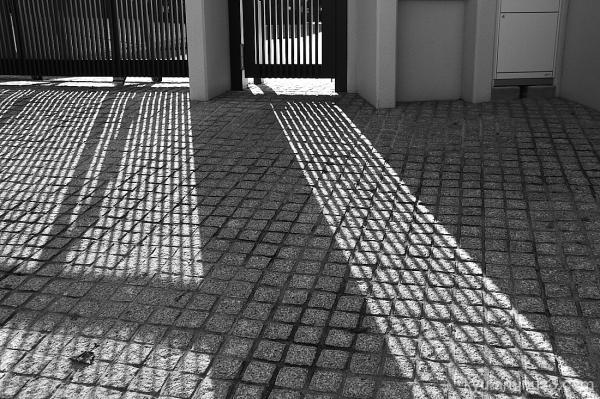 Shadows in the late afternoon
