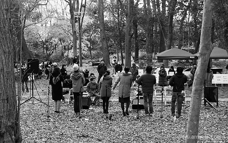 A cappella in the woods