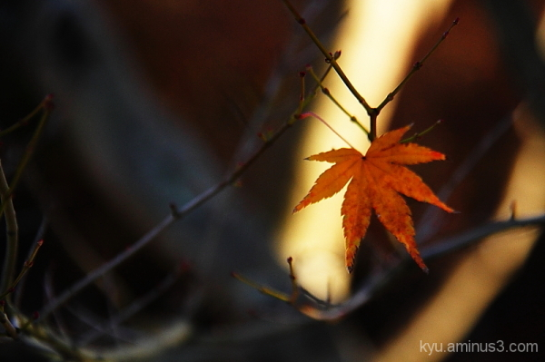 Last leaf on a branch