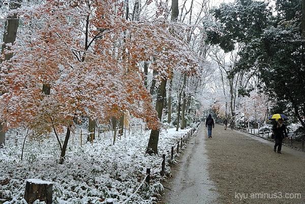 Tadasunomori with snow