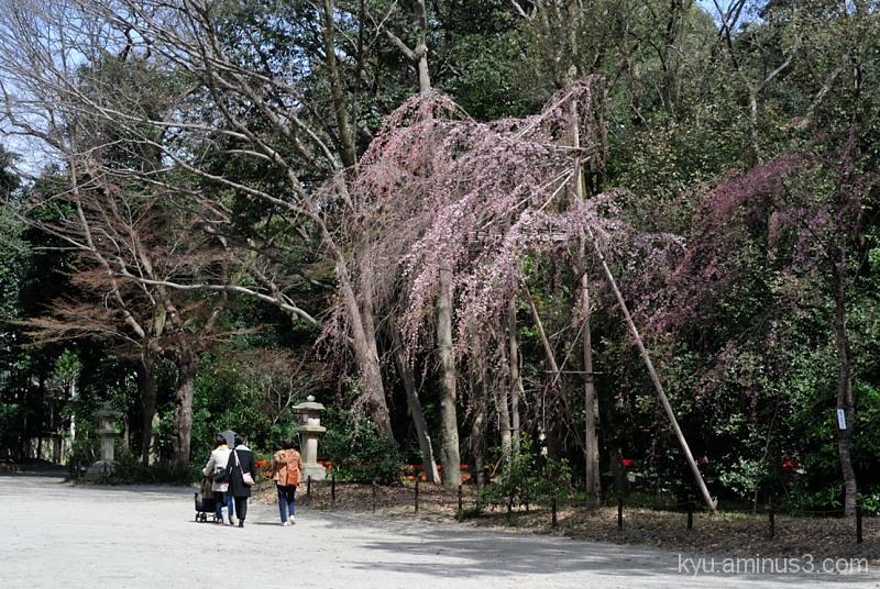 Enjoy a nice spring day