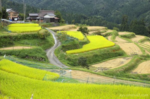 Lives around terraced rice paddies