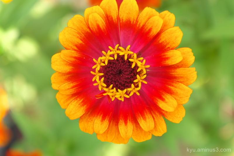 A flower in autumn
