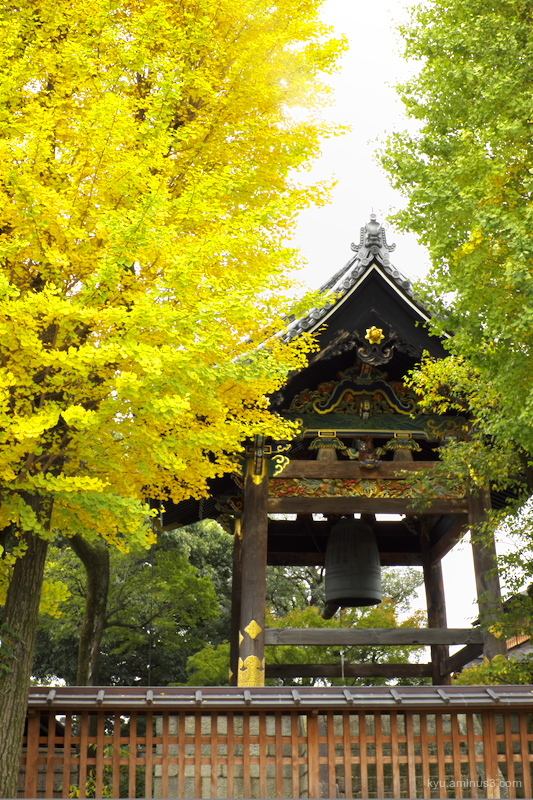 Bell tower with gingko trees