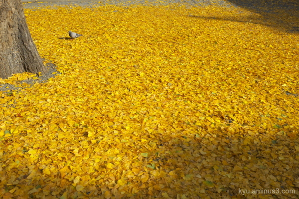 Walking on a yellow carpet
