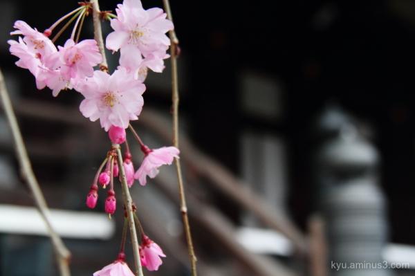 Image in spring