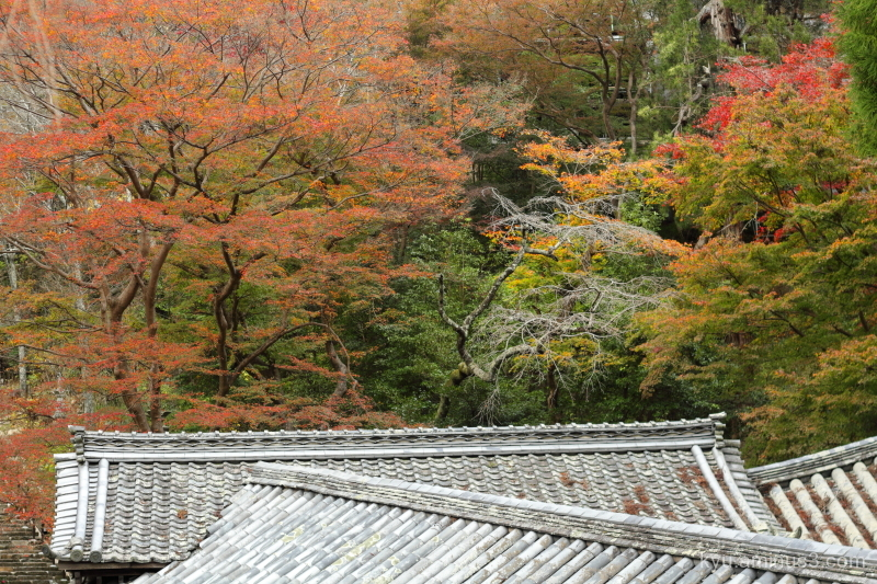 Autumn colors in the temple