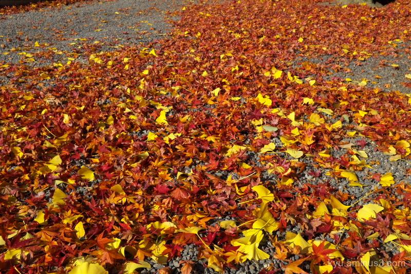 Autumn color carpet