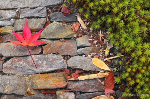 A leaf on a path