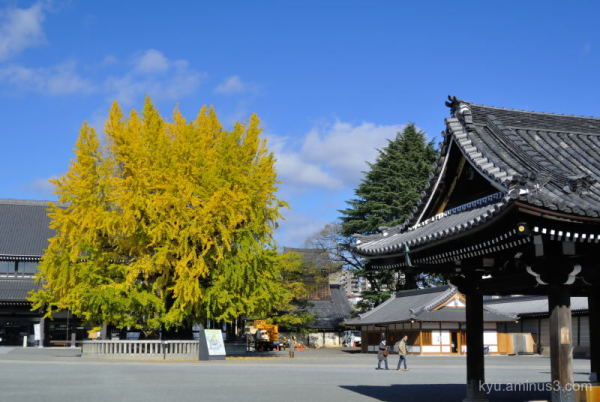 Late autumn view in Nishihonganji