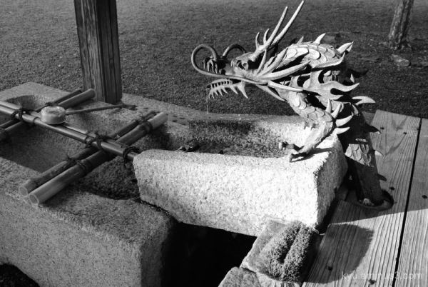 Dragon in the temple