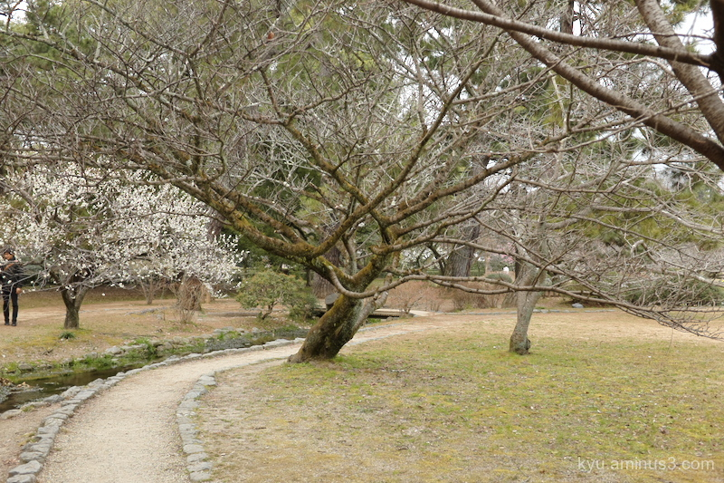 Path with plum blossoms
