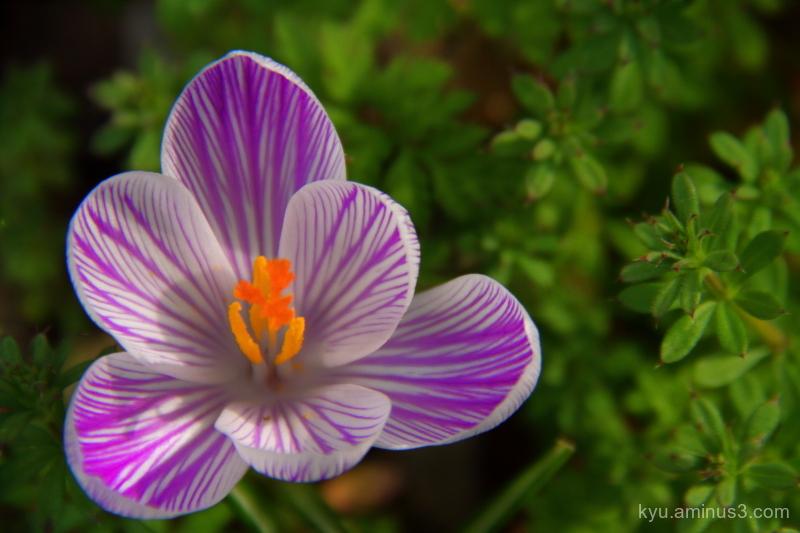 spring Little-regular-triangle flower
