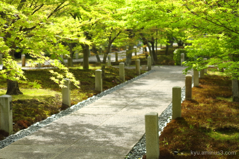 green-maple path Chishakuin temple Kyoto