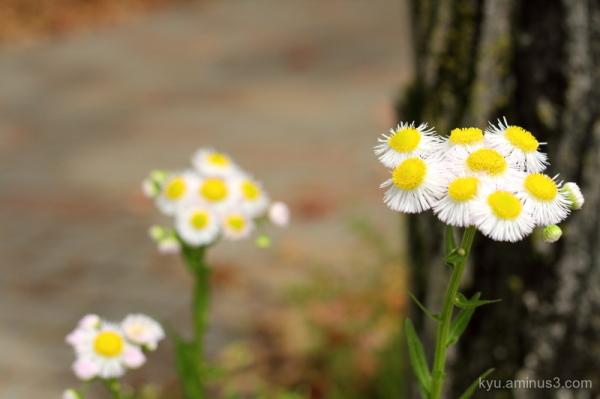 flowers sidewalk Kyoto