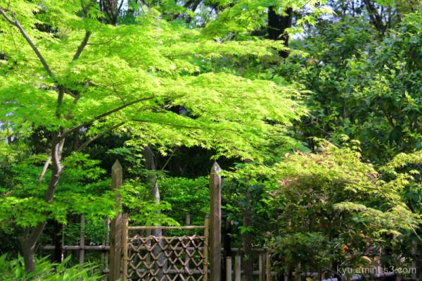 gate teahouse garden Daihoin temple Kyoto