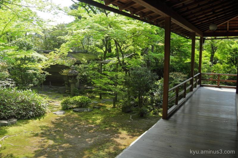 garden fresh-green Daihoin temple Kyoto