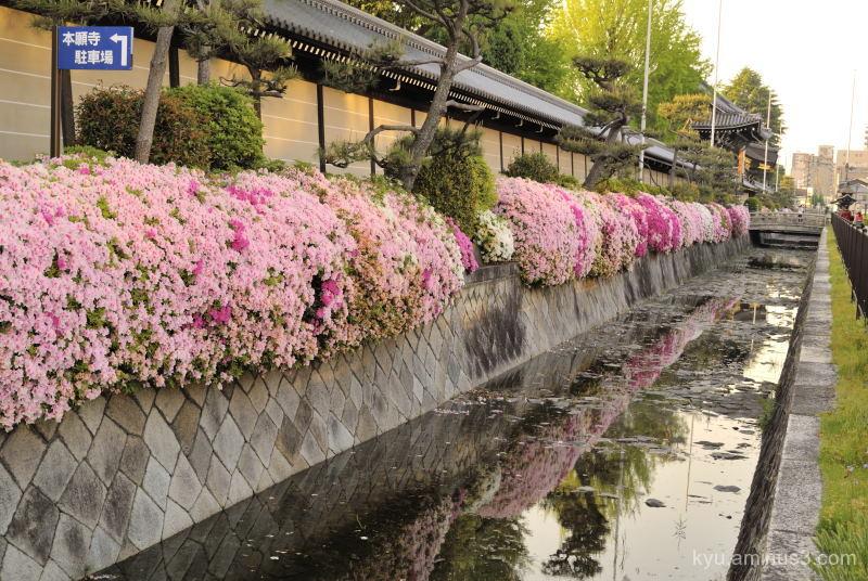 azalea Nishihonganji temple Kyoto