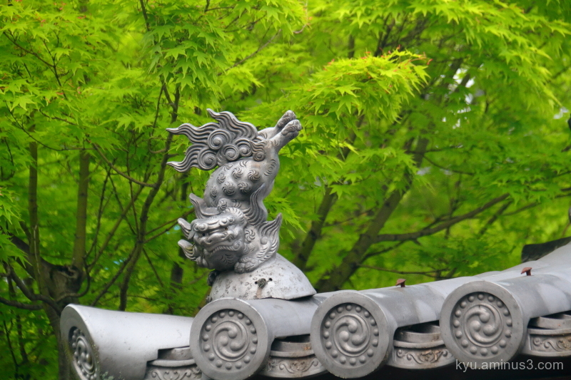 roof-tile green-maple temple Kyoto