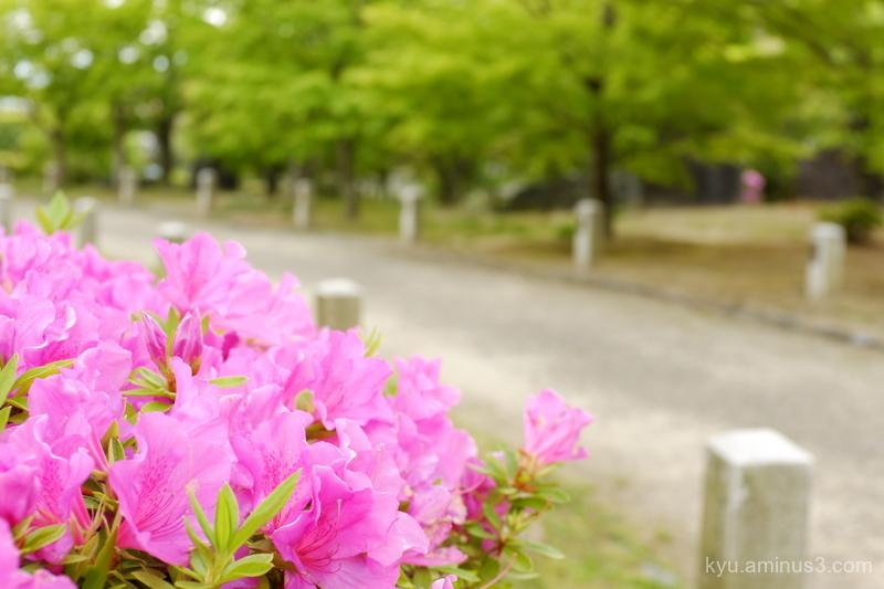 azalea approach Chishakuin temple Kyoto