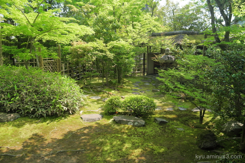 garden Daihouin temple Kyoto