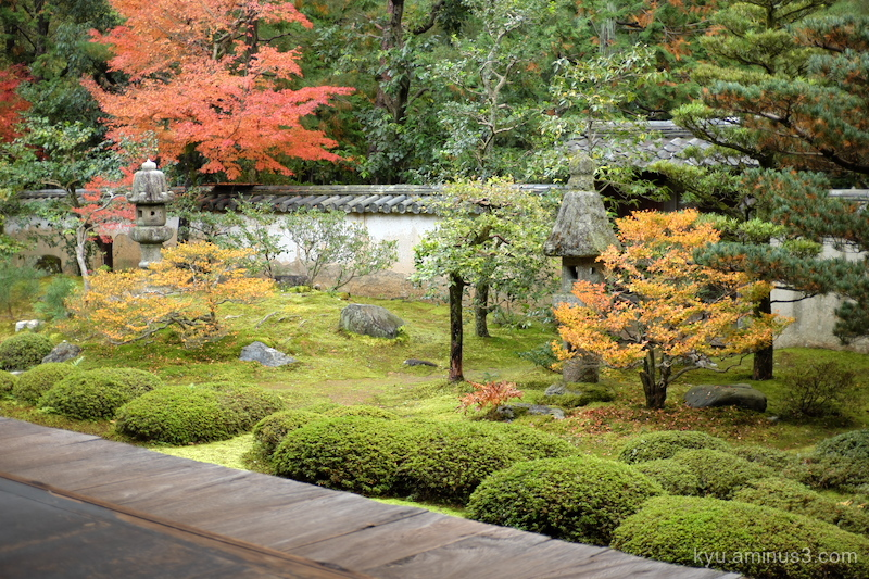 autumn red-maple garden temple Kyoto
