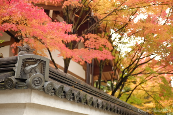 autumn red-maple roof-tile catfish taizoin temple
