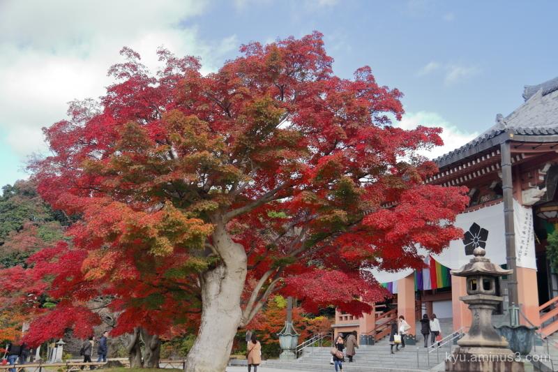 autumn red-maple Chishakuin temple Kyoto