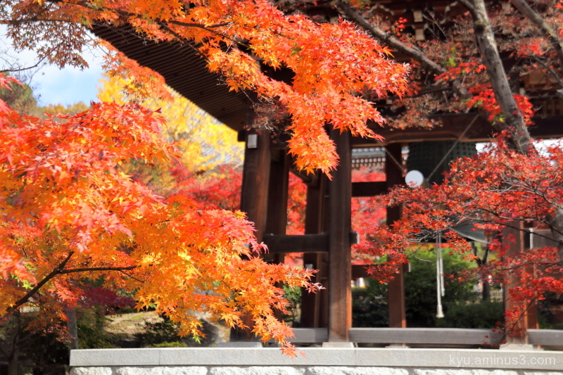 autumn red-maple bell-tower Chishakuin temple